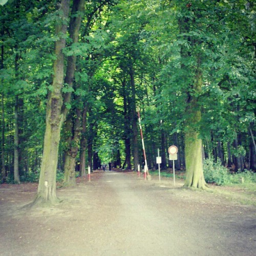 #Woods #Forrest #Path #Enter #Germany #Deutschland #Nature #Green #Trees  (Taken with instagram)