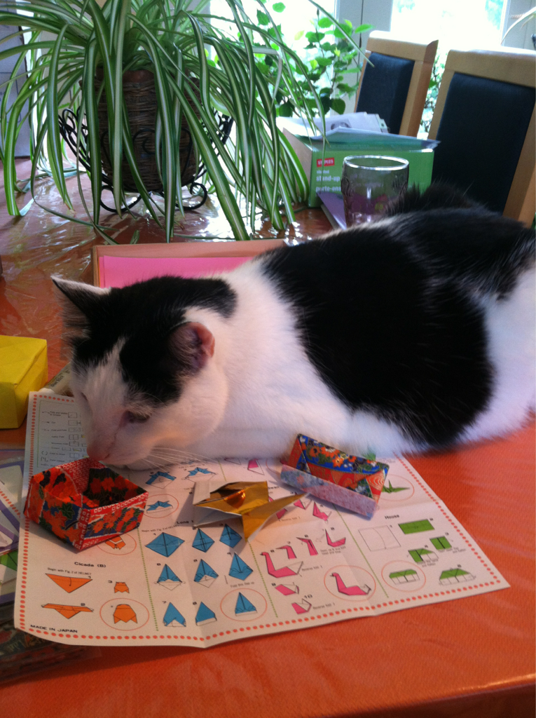 Happy Caturday.  Moo Radley attempting origami.