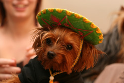 Happy Cinco De Mayo! Find out what the celebrating is all about on The Daily Quirk!