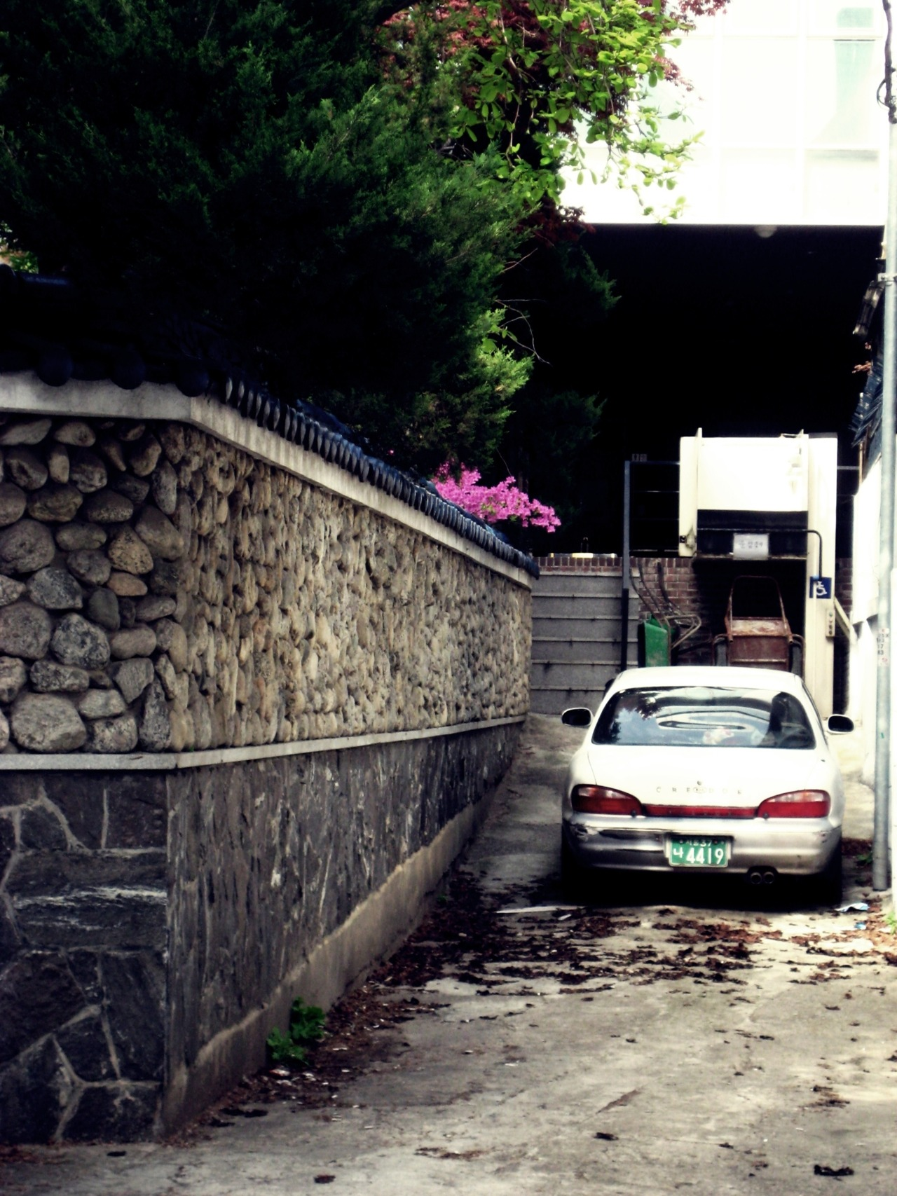 The Spring in the alley photo by me. Seoul, South Korea.