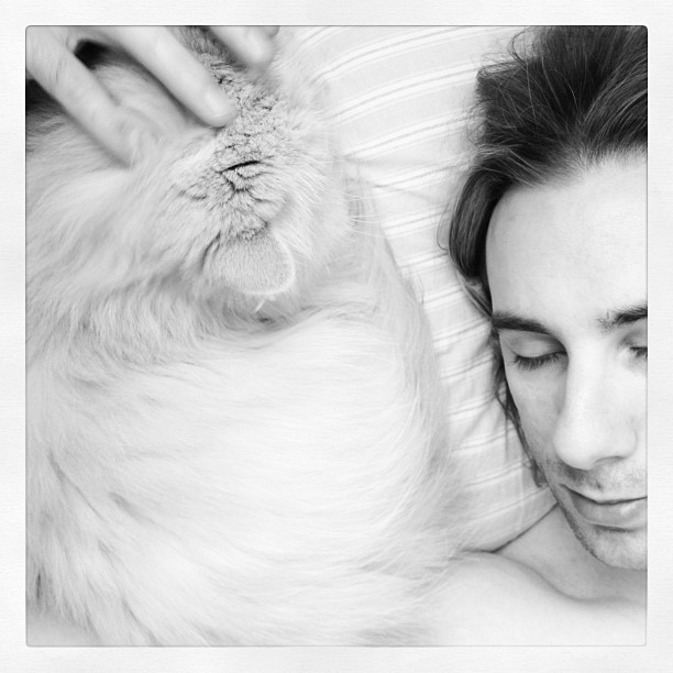 Puffy Fluffles loves her daddy. #cat #catsofinstagram (Taken with instagram)
