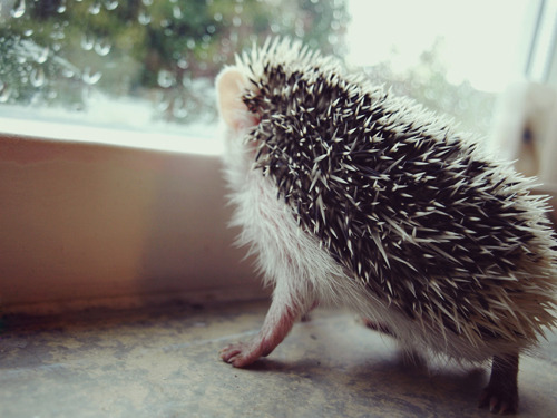 lokithehedgehog:  Watching the rain.