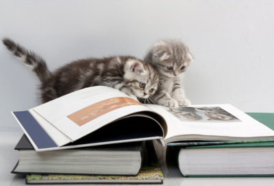 Kittens learning to read together.