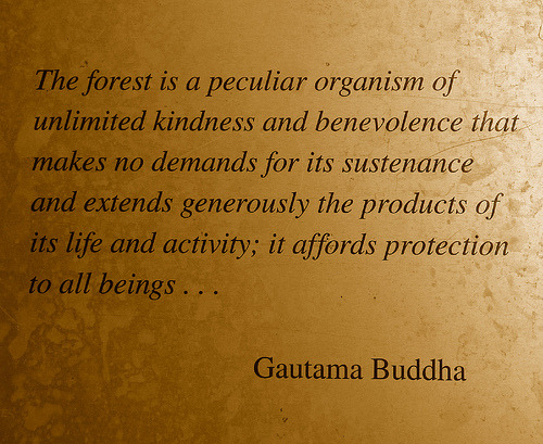 The forest is a peculiar organism…