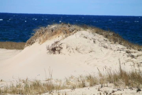 Sand dunes at Race Point, Cape Cod, MA