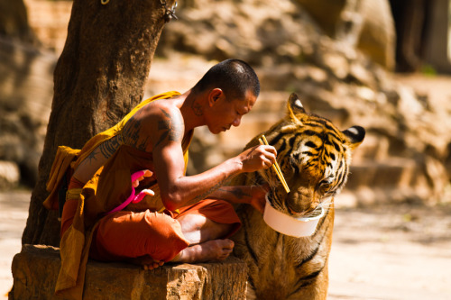 """Monk and Tiger sharing their meal."" by Wojtek KalkaTiger Temple in Kanchanaburi Thailand"