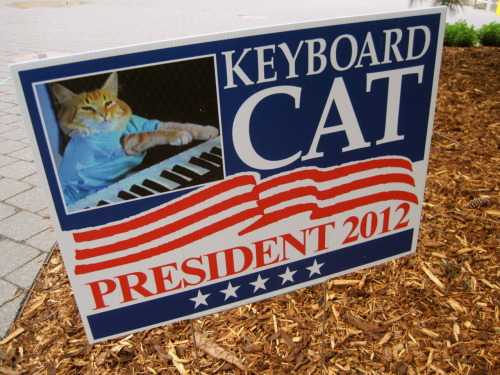 lollajames:  LONG LIVE KEYBOARD CAT.