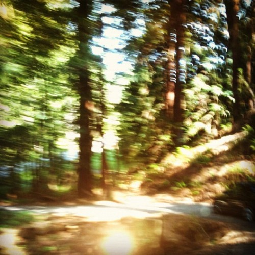 Santa Cruz Mountains road trip (Taken with instagram)