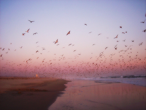 scaena:  Fly away with me (by OrangeCounty_Girl)