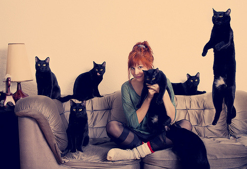 CATS (by andreannelupien)