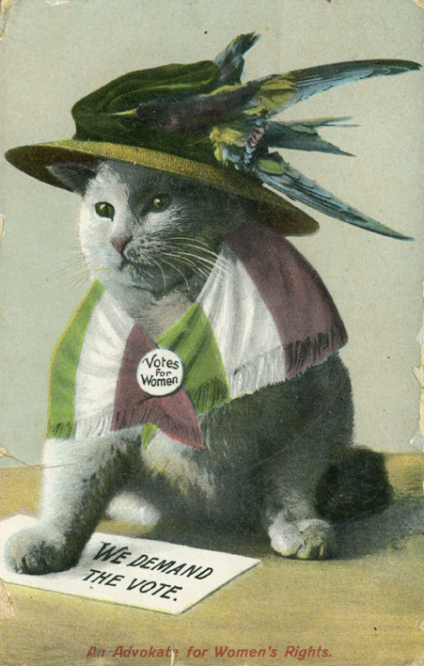 awkwardfeministmoments:  historicalslut:  Apparently feminists have loved cats since the suffrage movement. Who knew?  See? I told y'all that cats represent feminism. But did you believe me? Noooo. ;-P - yeas  It's probably because all feminists practice witchcraft….