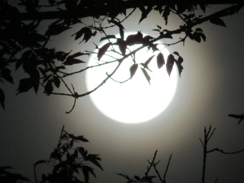 Supermoon, by Divine Ms. Moon