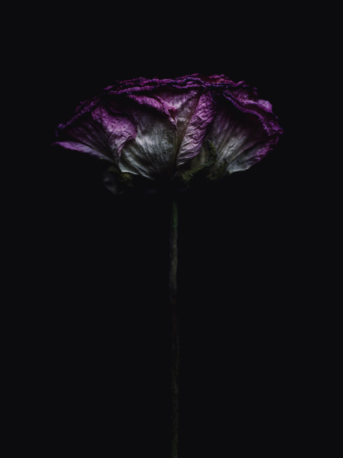 bornagaingoth:  Decaying flower was shot by Billy Kidd
