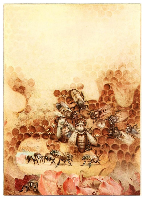 serpentskirt:  'The Life of the Bee' by Edward Detmold, 1901.
