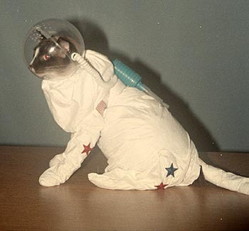 bearbaer:  This is my astronaut cat. He looks up to John Glenn and he likes to play with gold fish. His name is Mr. Francis Whiskers.