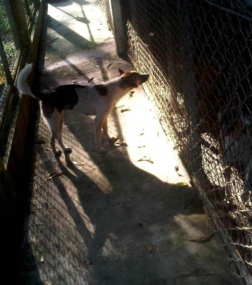 Another dog without a home -taken at Soi Dog in Phuket.