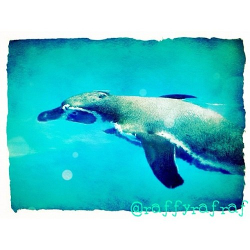 Pic was taken @ Manila Ocean Park #tweak_may6 #dolphins #oceanpark #8pmhabit (Taken with instagram)