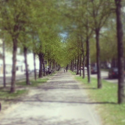 Damn #gothenburg you're so pretty! #göteborg #sweden #sverige #trees (Taken with instagram)