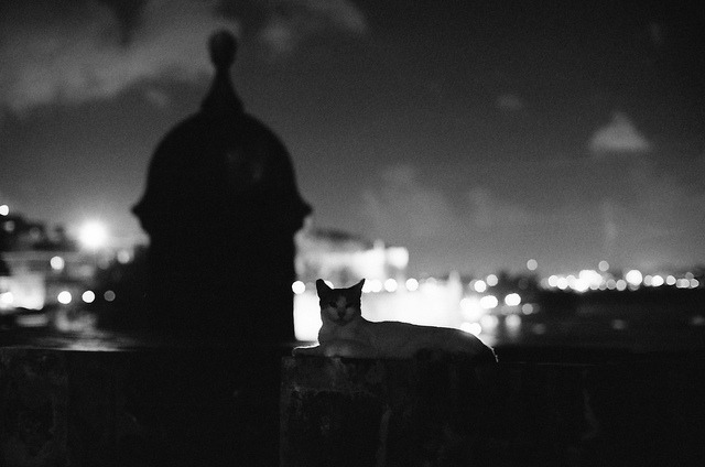 gato on Flickr.Via Flickr: Viejo San Juan, Puerto Rico.  Nikon F3 HP | Nikkor 50mm f/1.2 AIS | Ilford Delta 400 @ 800