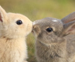 10knotes:  Bunnies are so cute! This post has been featured on a 1000notes.com blog.