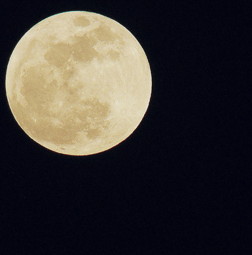 veganfeast:  SuperMoon on Flickr. How Big was your Moon?