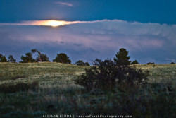 Perigee Moonrise, Happy Jack, Medicine Bow National Forest, WyomingI went out last night to see the perigee moon (Supermoon) but unfortunately it was cloudy. By the time the moon peeked above the clouds it was already far above the horizon and looked much smaller. Nonetheless it was nice to take the Jeep and my dog miles into the hills on rocky dirt roads to watch the moonlight take over the night.