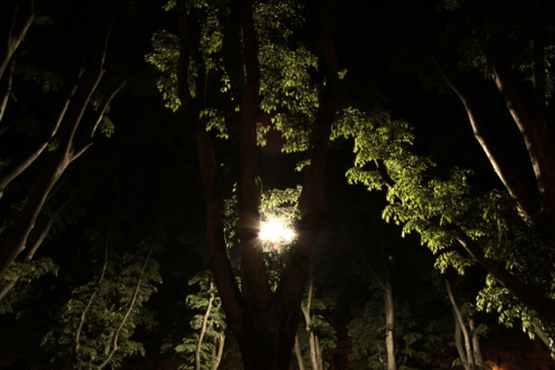 LS 07|Trees Submissions - Illuminazione  by JOYKIX / Fabrizio Longo All images © courtesy of JOYKIX / Fabrizio Longo