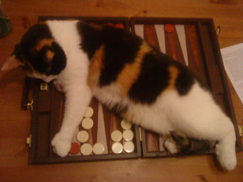 getoutoftherecat:  you can't just cover the whole board and say you win.