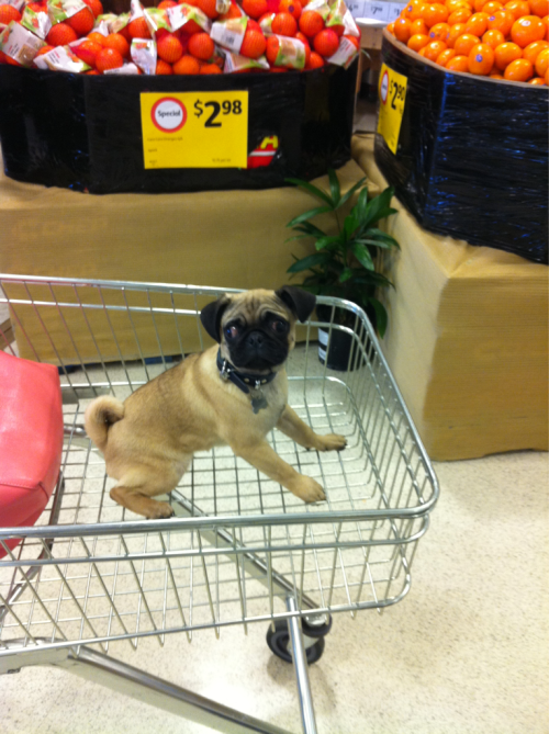 bailey shopping