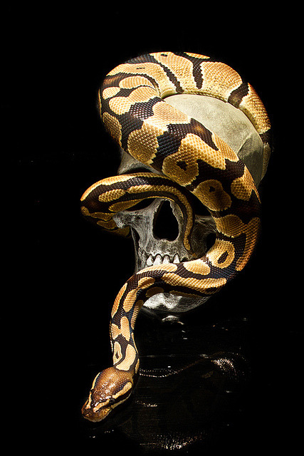 pinec0nez:  april snakes-23 by FionaBrimsPhotography on Flickr.