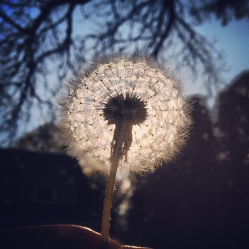 blow (Taken with instagram)