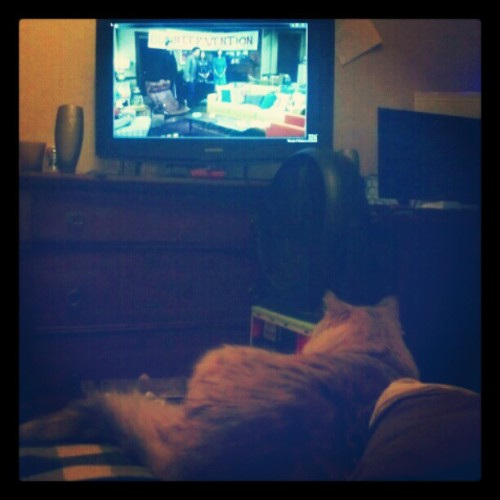 Luna likes watching How I Met Your Mother. (Taken with instagram)