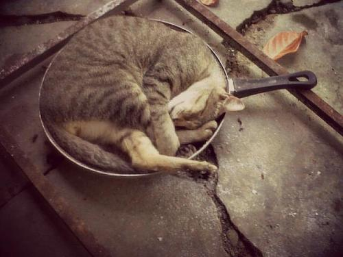 a cute little cat sleeping in a pan….