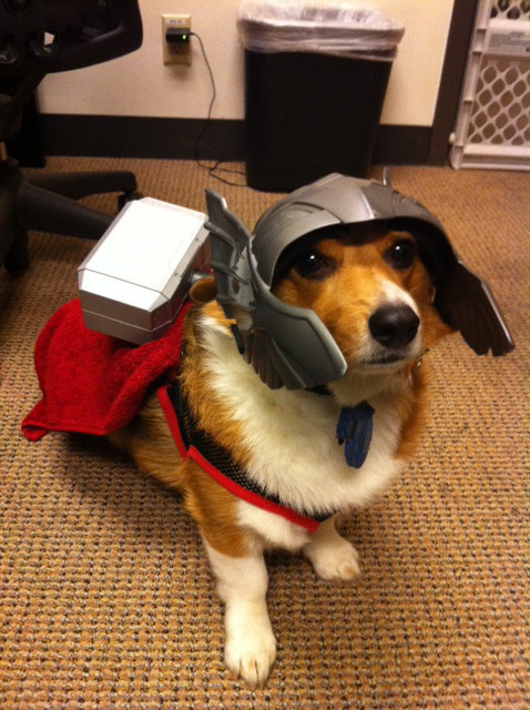 its a thorgi.  your argument is invalid.