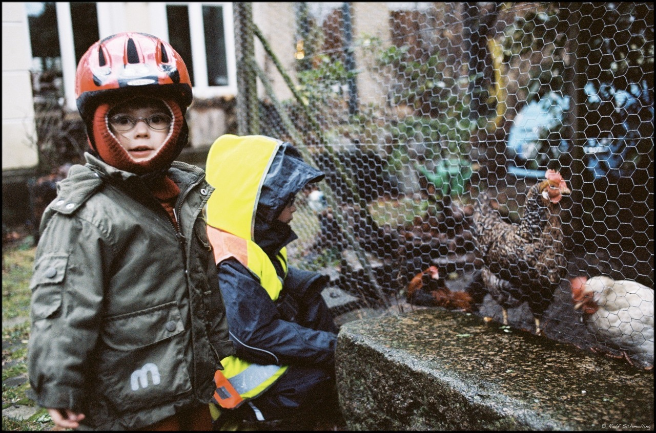 Visiting the chicken… January 2012. On Flickr #believeinfilm A couple living in our street holds three large chicken together with a very small cock for fun and entertainment of kids. Nikon F2 2.0/35 AIS on new Kodak Portra 160 @160 developed and scanned by Richard Photo Lab