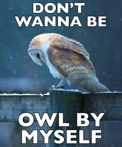 all alone owl. original image via