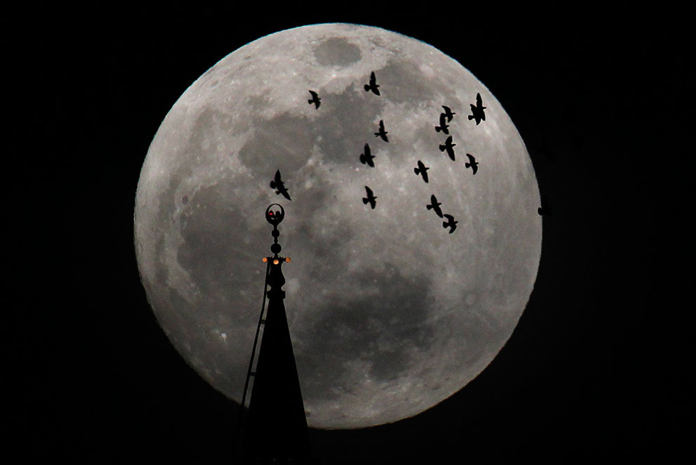 deadhorsebrooklyn:  My favorite picture of this weekend's witchy moon. So sad we couldn't see it in New York on Saturday. The full moon rises behind a mosque as birds fly in Amman, Jordan, on May 5, 2012. More here.