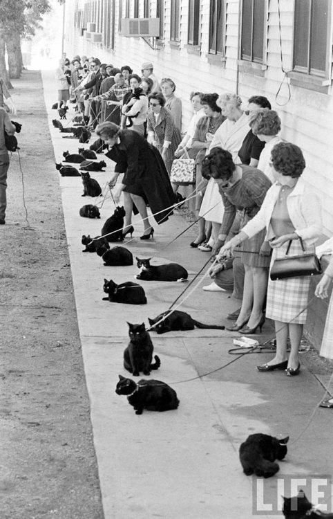 Black Cat Auditions in Hollywood (1961)  (thanks to easyD)