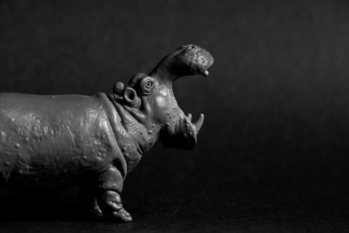Hippo on Flickr.