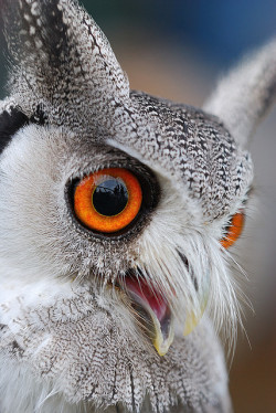 "sun-stones:  ""Hoot!"" by Andy Drake on Flickr."