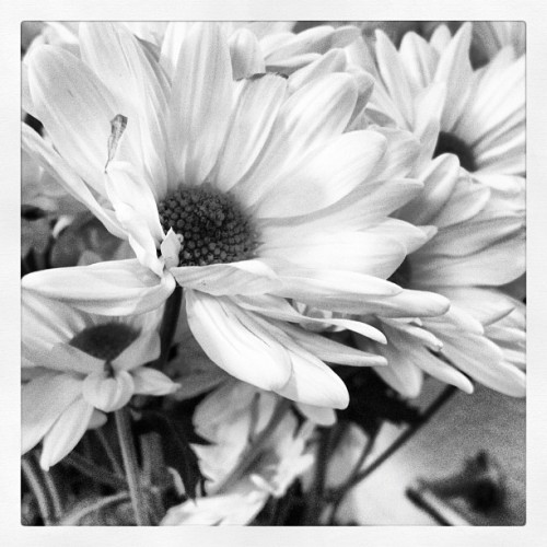 Flowers to brighten the dorm room! (Taken with instagram)