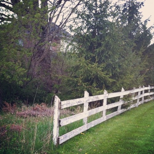 #fence #grass #trees #branches #nature #naturelove #naturalbeauty #naturesbeauty #fence #woodenfence #spring #outside #outdoors #iphone4 #iphoto #photographylove #instamood #instaphoto #instaphotography  (Taken with instagram)