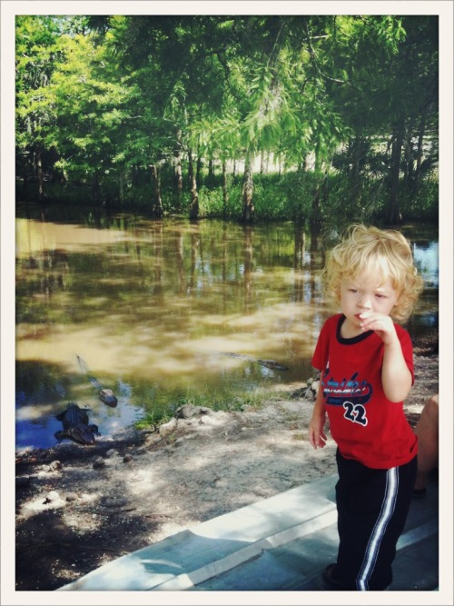 Baby and the gators. The other Louisiana treats noted but not pictured here: stinging caterpillars, humidity, boudin, andouille, jack n ginger, and a raft of good music and friendly folks. I love my Louisiana peeps.