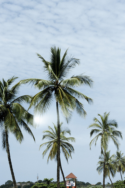 palm by Abie Lamin on Flickr.