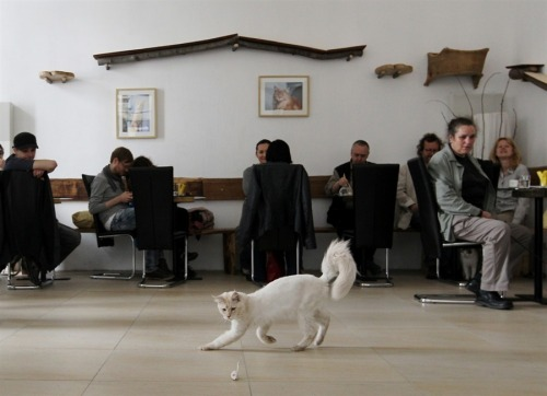 "Vienna now has a ""cat cafe."" (Via MSNBC's Photoblog)"