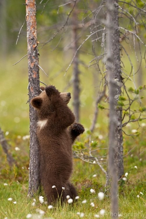 How to hold up a Tree :via:cutestuff