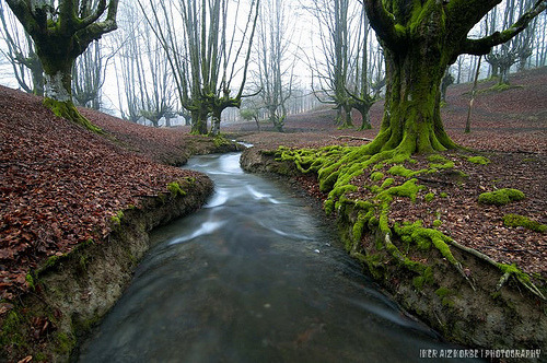 woodendreams:  (by Iker Aizkorbe Agirre)
