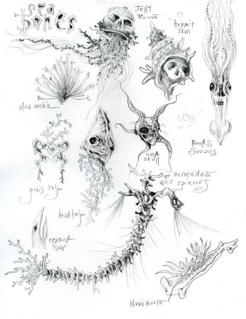 "more salty bones, graphite, 2012 study for my second nest (first was bird bones) of coral with ""sea bones"" inside … wendy malinow inkhead"