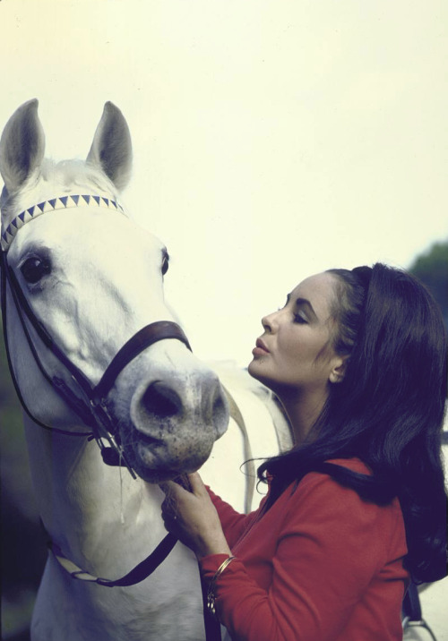 """Some of my best leading men have been dogs and horses."" – Elizabeth Taylor."