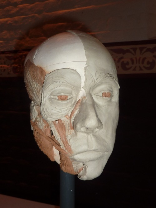 A close up of a reconstructed face from the Reading Faces heritage festival event at East Perth Cemeteries on the 5th & 6th of May. Across 2 days the participants built the anatomy of a face – muscles – and then put skin onto it to get a sense of what the person whose skull we were working on looked like. Dr Susan Hayes, who ran the workshop, is a facial anthropologist.